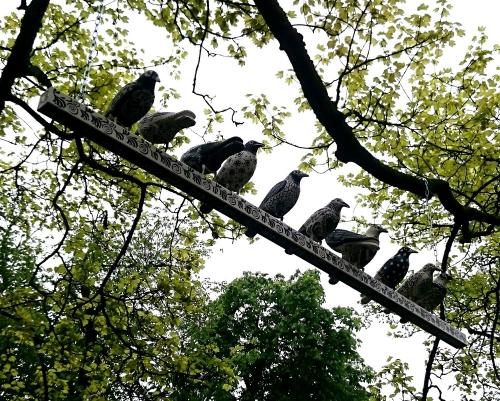 The Crows of HeArtlane